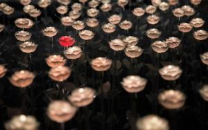 沢山の花の中にある一つだけ赤い花